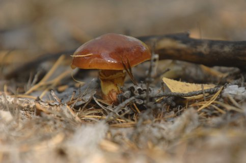 Найден новый вид грибов вТверской области