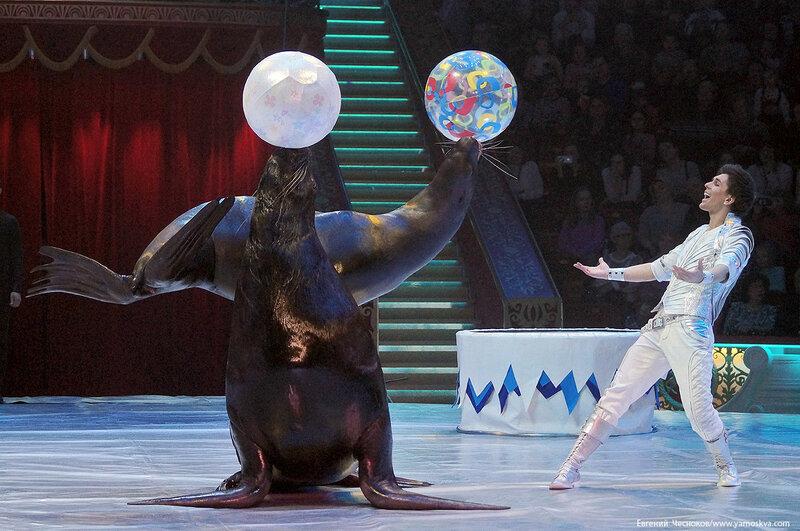 Цирк Никулина. Магия цирка. 21.02.17.48.Тимченко..jpg