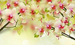 cvety-orhidei-zheltye.jpg