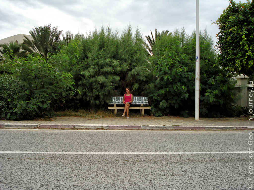 скамейка в окружении зелени