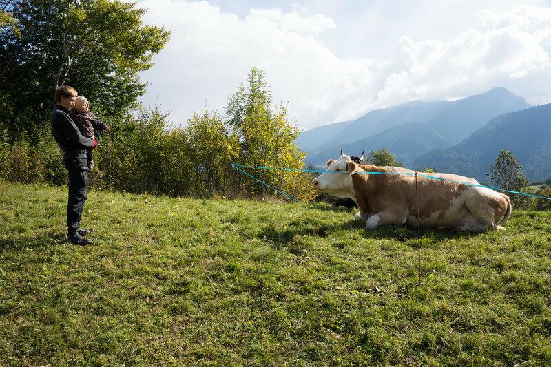 ребенок и альпийская корова