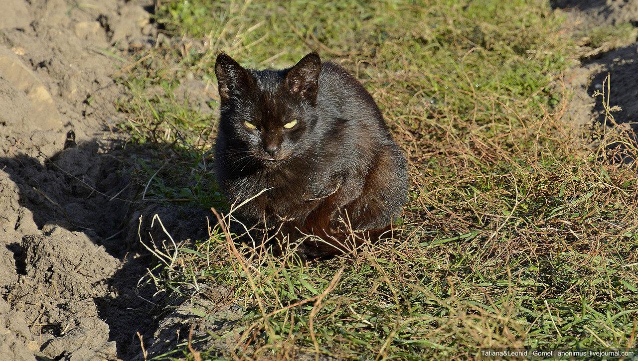 Не породистые коты