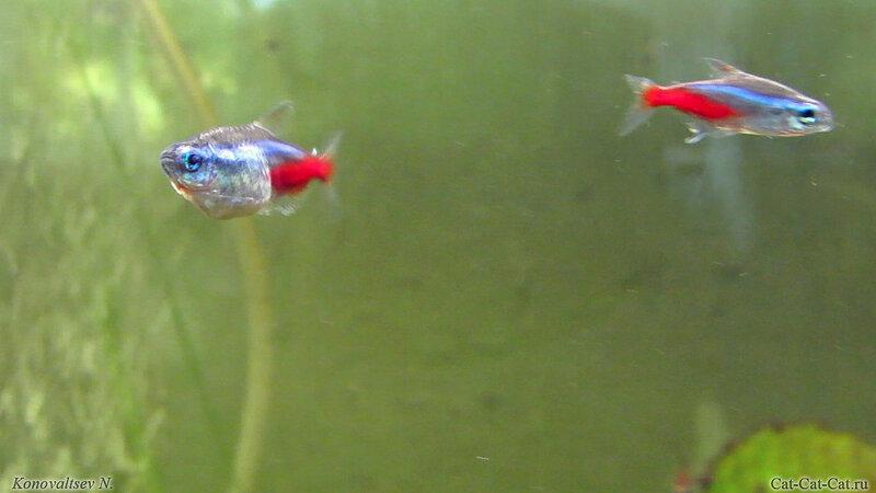 Рыбки в аквариуме