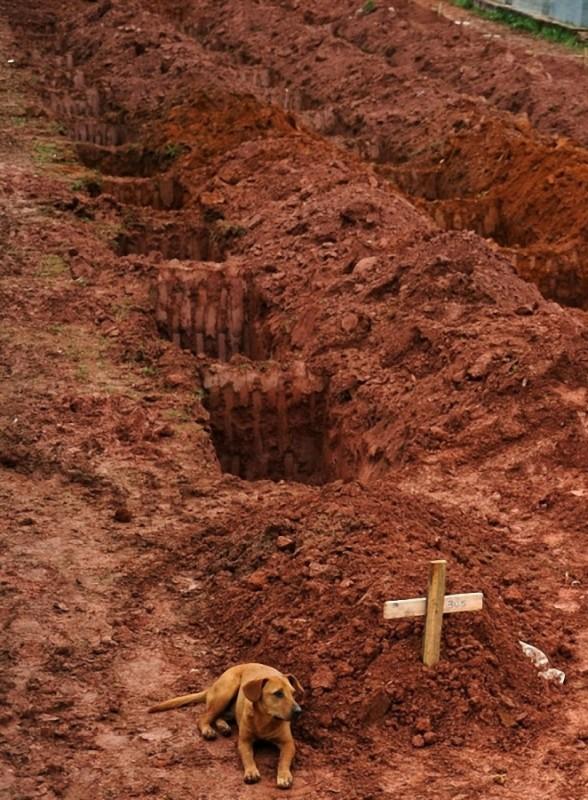 8. Собака по имени Leao сидит в течение двух дней у могилы хозяина, который погиб в жутких оползнях.
