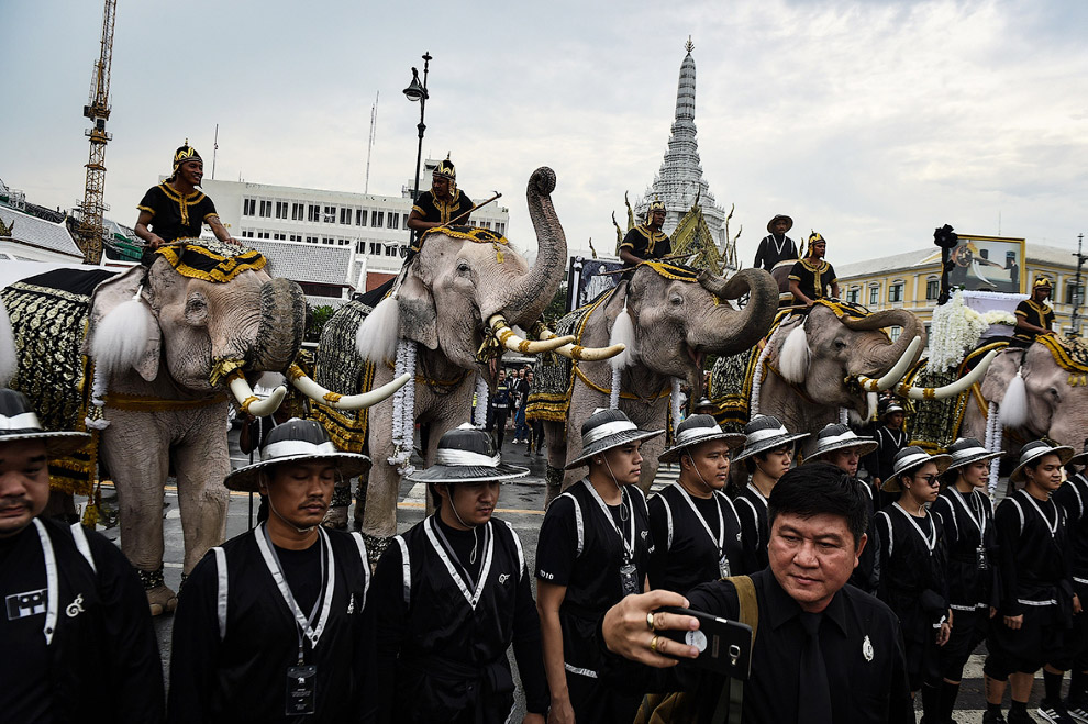 Слоны почтили память короля
