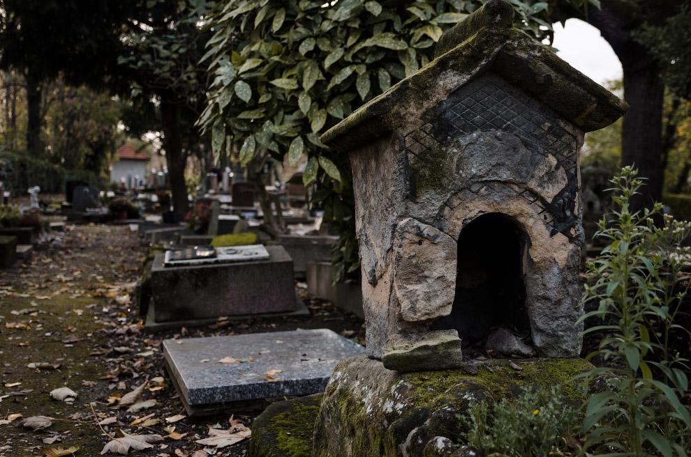 7. Кладбище собак в Париже, 30 октября 2016. (Фото Charles Platiau | Reuters):