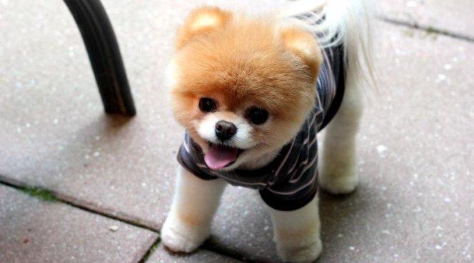 Ученые: Собаки запоминают действия собственных хозяев
