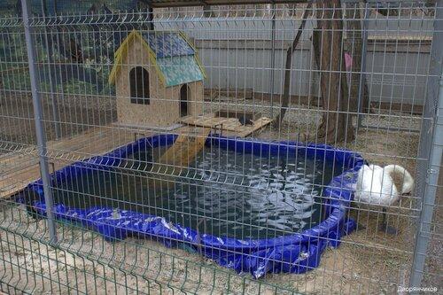Новоселье у лебедя в Зоодворике - парк ВГС - 16 ноября 2016