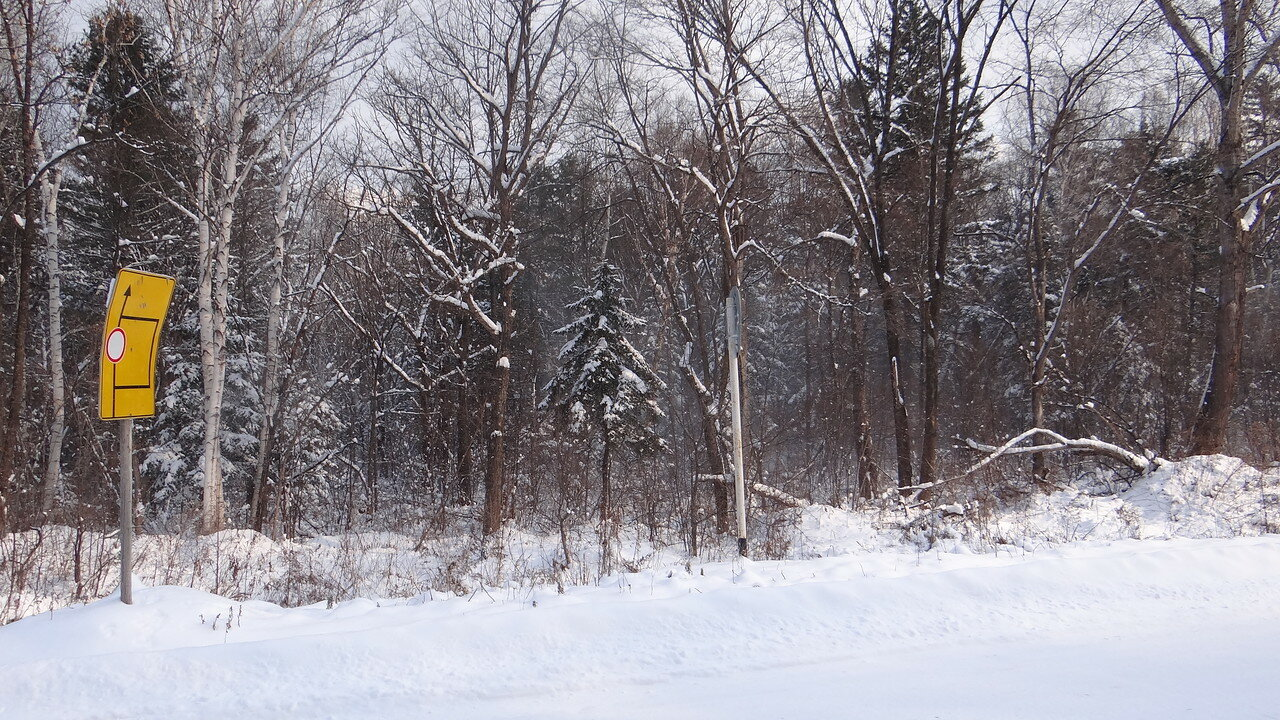 Снег в тайге. Октябрь.