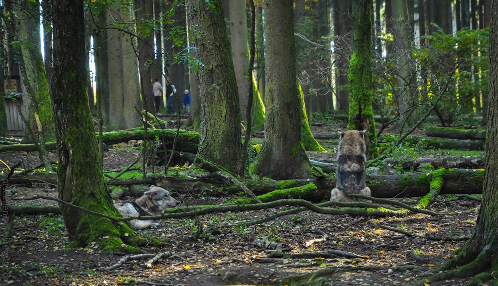 Tierpark-(19).jpg