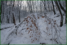 http://img-fotki.yandex.ru/get/194549/15842935.41d/0_f1858_b35afa5d_orig.jpg