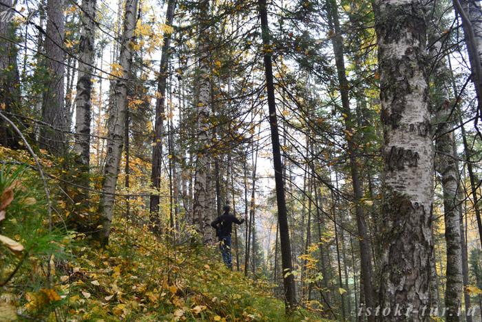 лес_на_склоне_les_na_sklone