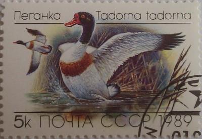 1989 пеганка птица 5к