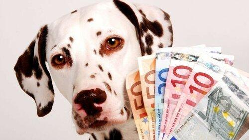 1cani-e-soldi_quanto-costa-mantenere-un-cane.jpg