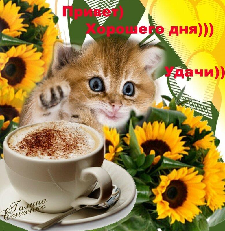 Открытки с котятами и пожеланиями доброго утра и хорошего дня, самогона