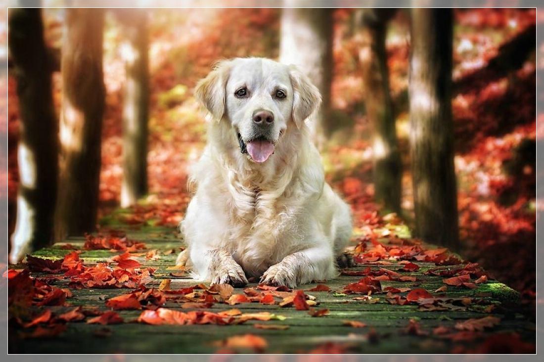 Осенние собаки в фотографиях Gabi Stickler (Германия)