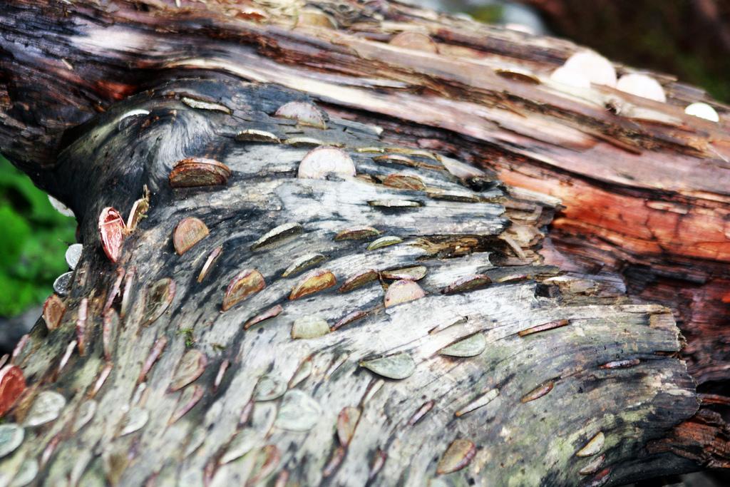18. Тисдейл – самое холодное место из всех, где есть денежные деревья. Это долина на восточной
