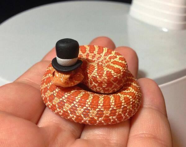 Только не говорите, что не любите змей. Это же маленькая змейка!