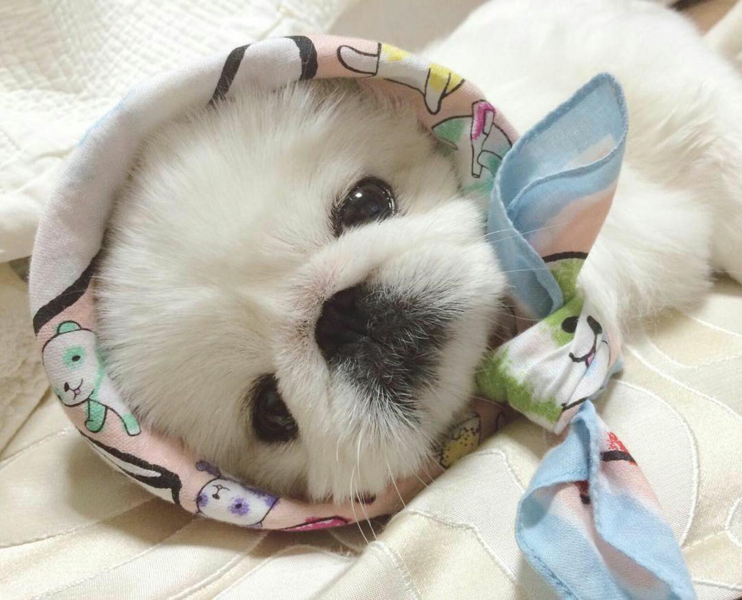 Невыносимо милые детеныши животных, которые сделают ваш день лучше