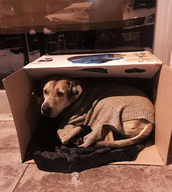 Местные жители приносят коробки, теплые вещи и корм для бродячих животных