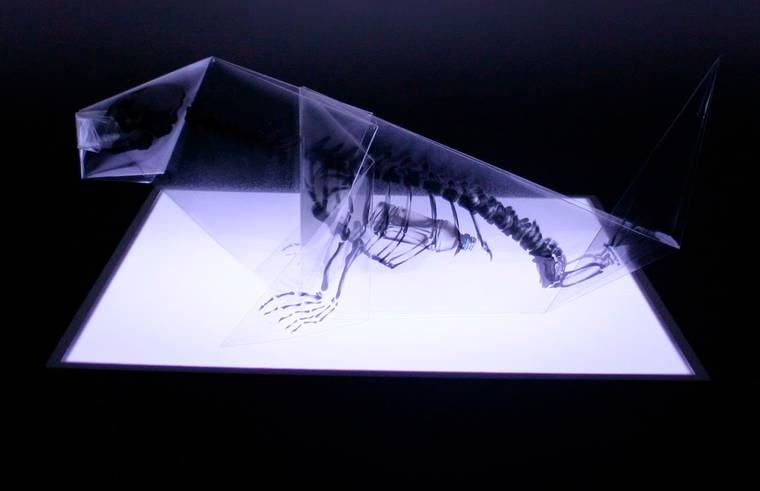 Origami Anatomy - A Japanese artist unveils the skeletons of origami