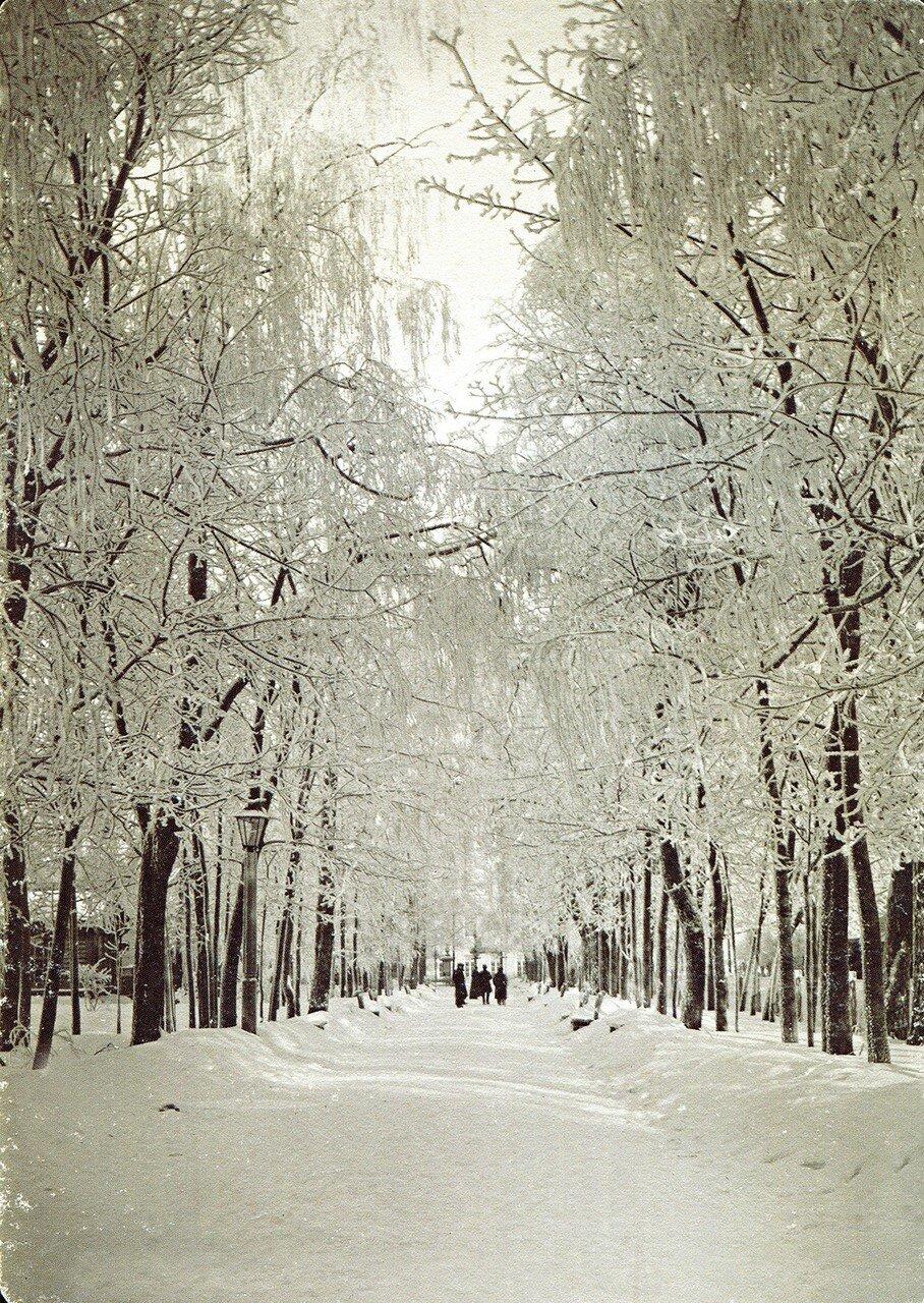 Городской сад Блонье зимой
