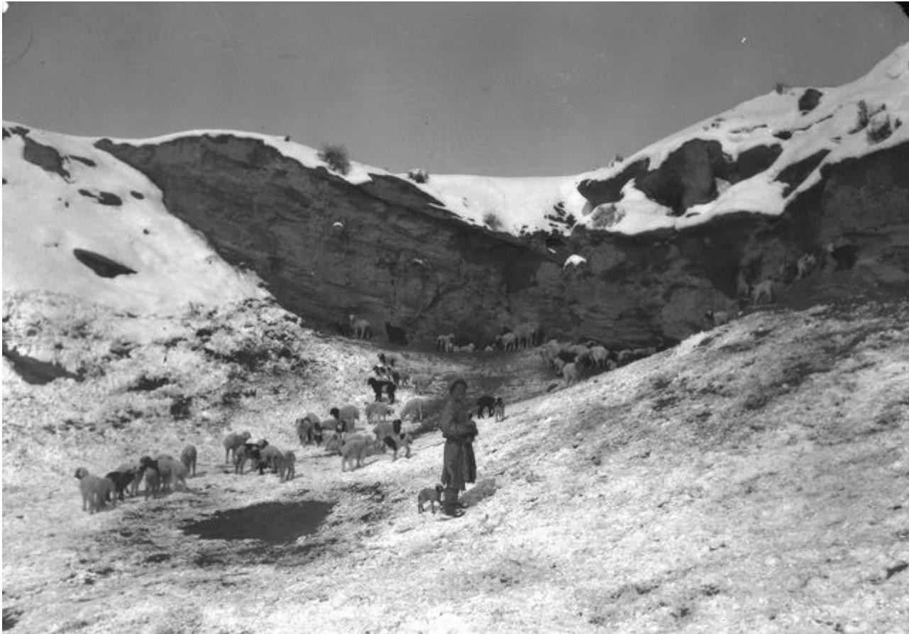 Пастух со стадом в долине Аватин в окрестностях Гызыл-Булагин
