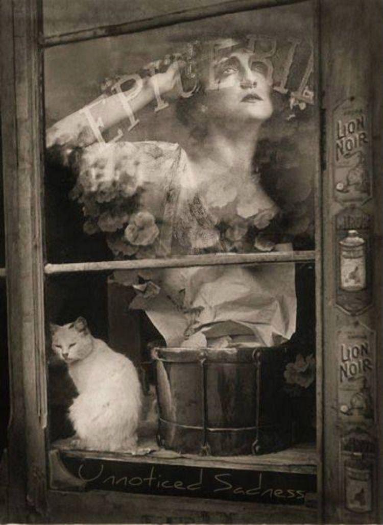 1938. Кот в окне