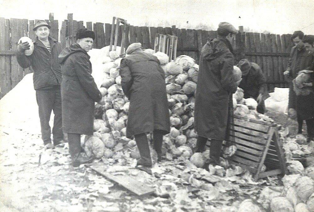 1982 Сотрудники московского НИИ сортируют капусту на овощебазе.jpg