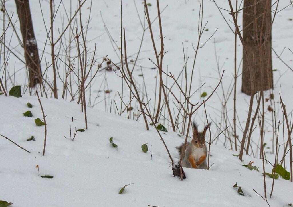 Нескучный сад зимой: царство белок, воробьев и синиц