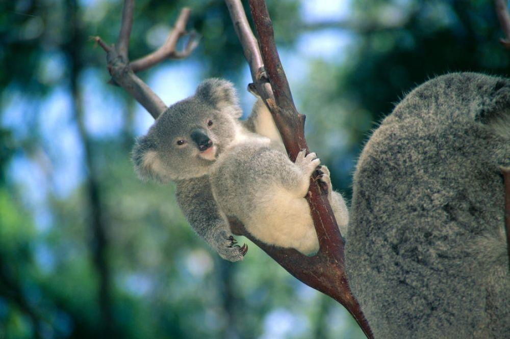 Приезжай ко мне в Австралию.