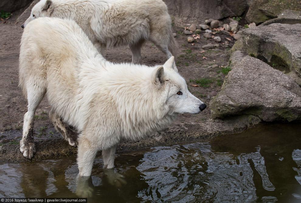 6. Зоопарк ежегодно посещает около 3,3 миллионов человек. Постоянными посетителями последнее вр