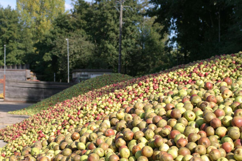 5. Первое упоминание о том, что в Нормандии яблочный сидр перегоняется в спирт и настаивается в