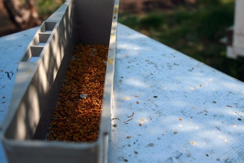4. Пыльцу пчеловод может собирать не каждый день. Если, например, пчёлы с утра собрали пыльцу, а пот