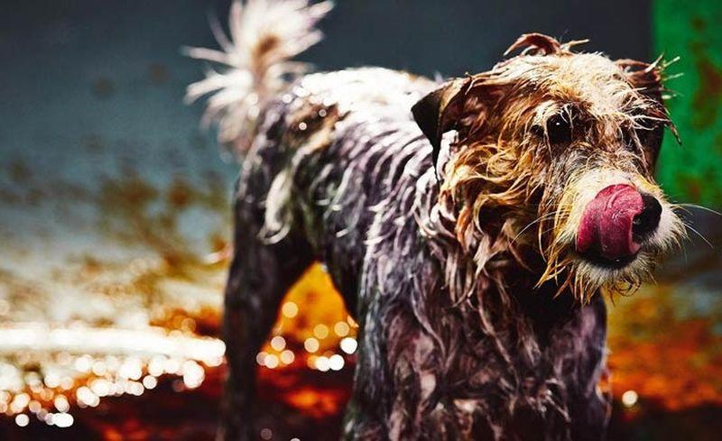 1. Этот арт-проект, получивший название Canismo, организовало бразильское агентство по защите животн