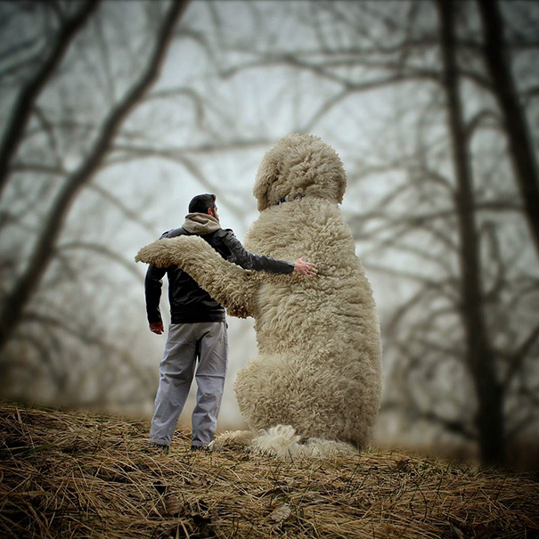 Мастер «фотошопа» превратил своего пса в гиганта