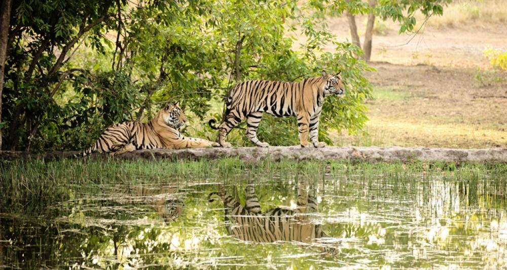 © mouthshut  Здесь обитает самая большая популяция тигров вовсей Индии.  Улуру— Ката-Тьют