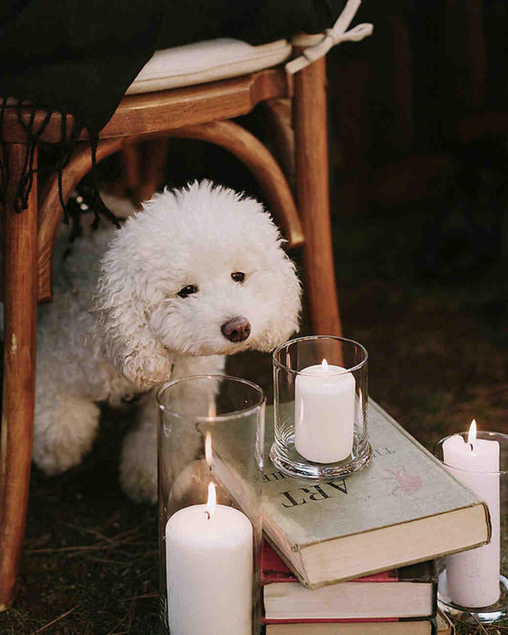 Вместо маленькой девочки с цветами по проходу прошла собака пары — Милли.