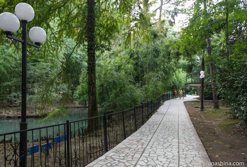 Дорожка вдоль пруда в Нижнем парке, Сочинский дендрарий