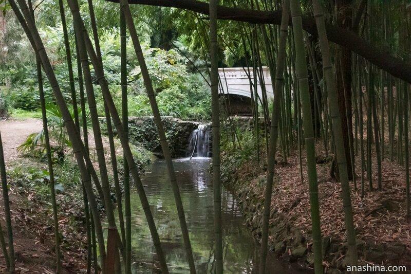 Ручей с водопадом, Сочинский дендрарий