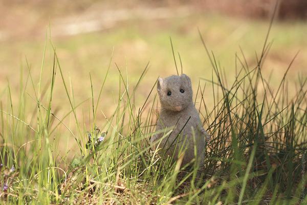 мышь-3.jpg