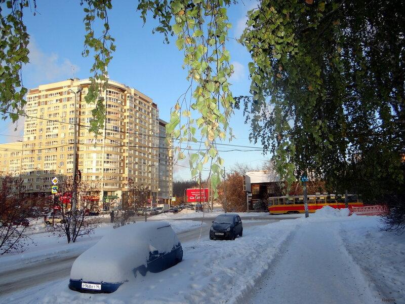 листва зимой