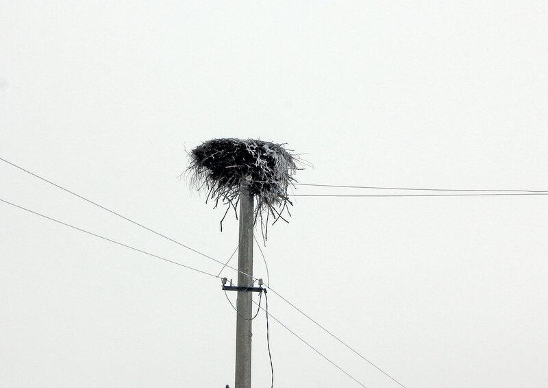 Гнездо аиста на дороге от Осуги до Сычёвки