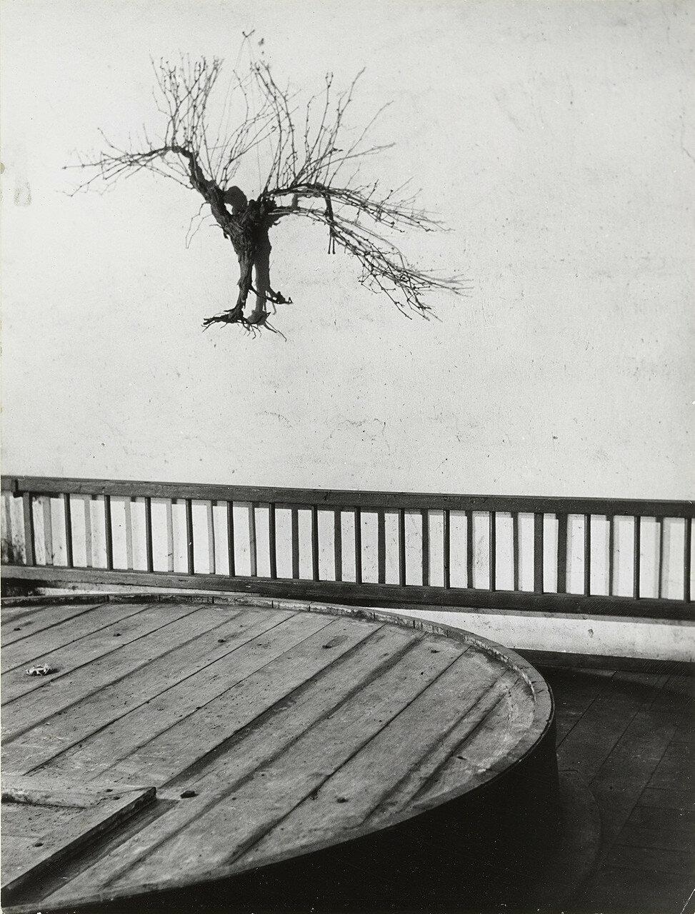 1955. Лоза в винном погребе, Шато Мутон-Ротшильд