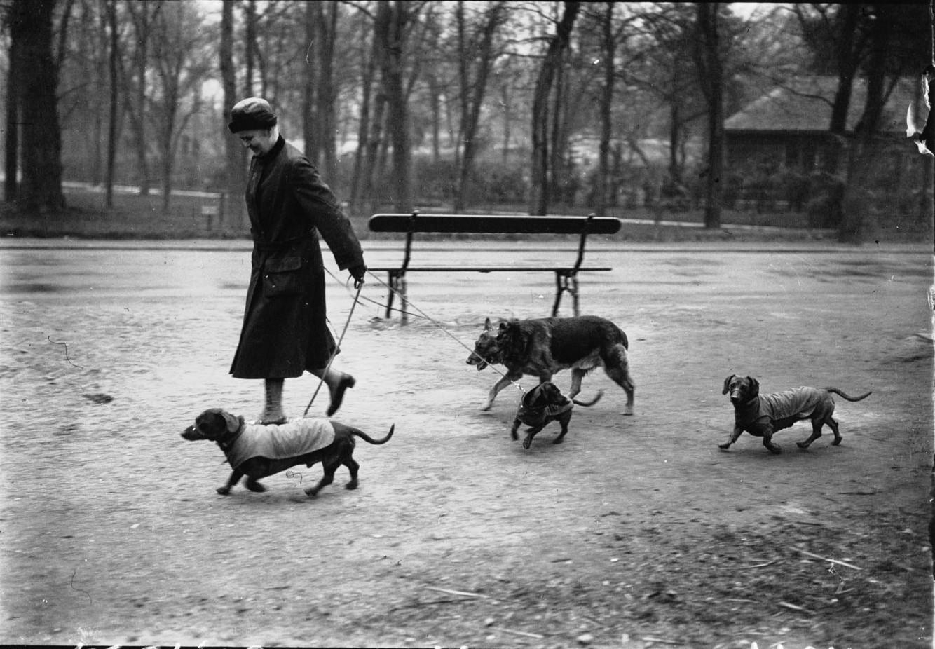 Прогулка с собачками в Булонском лесу