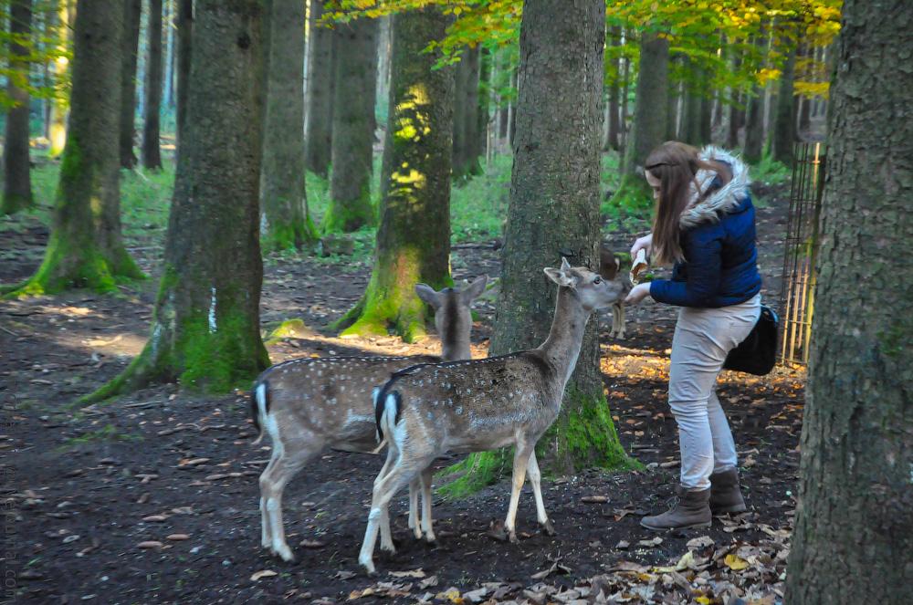 Tierpark-(23).jpg