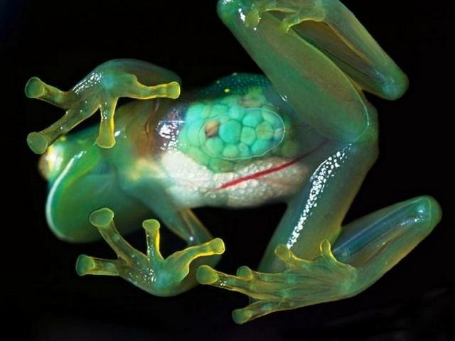 Удивительные прозрачные существа