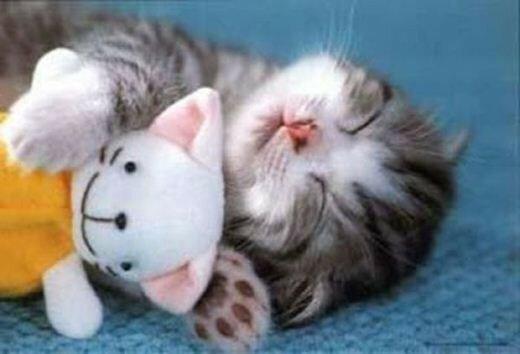 Коты и мягкие игрушки   милые фотографии