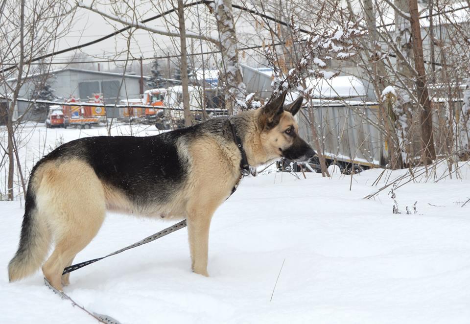Тори собака из догпорта