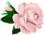 SSS_Roses_Element-13.png